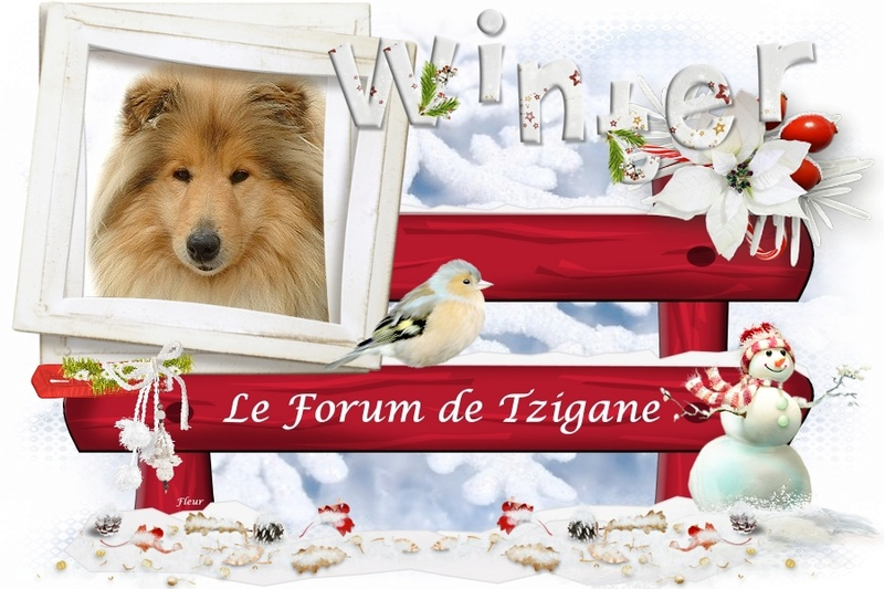 Le Forum de Tzigane