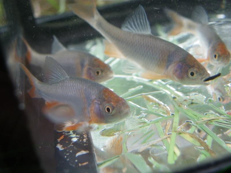 Cr ation de a z du bassin de lipette page 10 for Bac a poisson jardiland