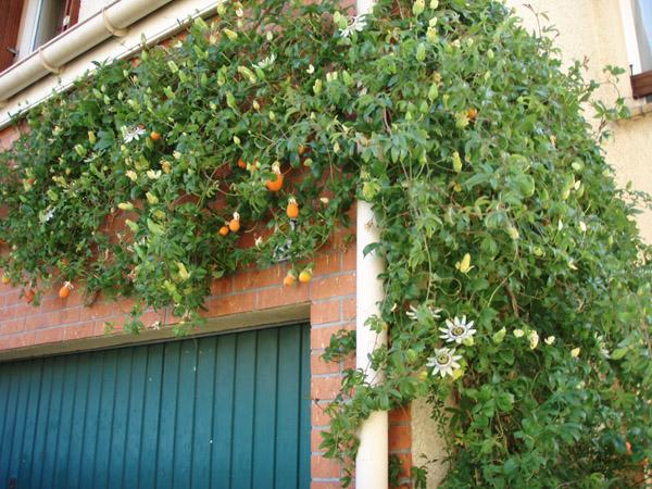 Un jardin en avesnois page 8 - Les jardins de passiflore ...