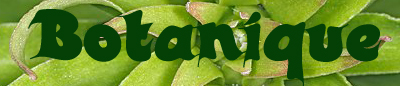 http://i37.servimg.com/u/f37/11/07/01/13/botani10.jpg