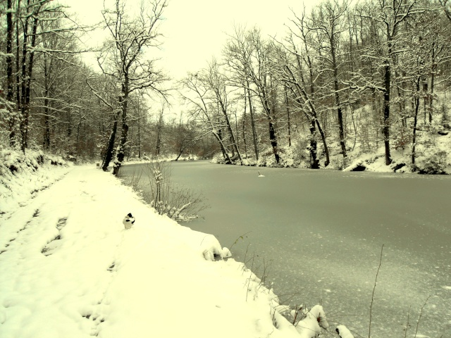 neige_10.jpg