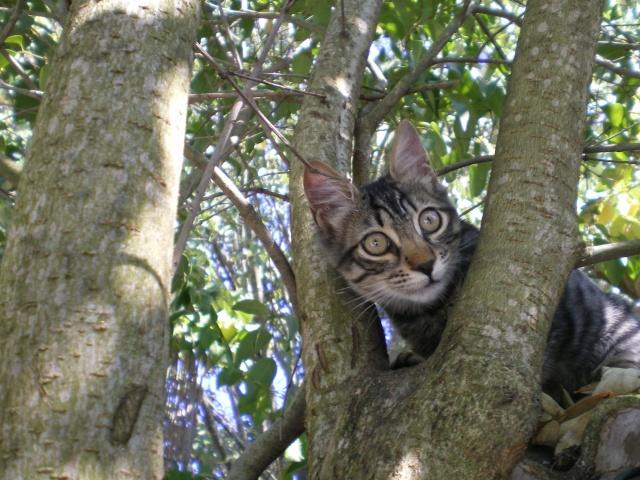 N ron forum sur les chats - Loi sur les chats et le voisinage ...
