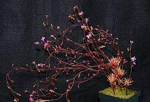 plante12.jpg