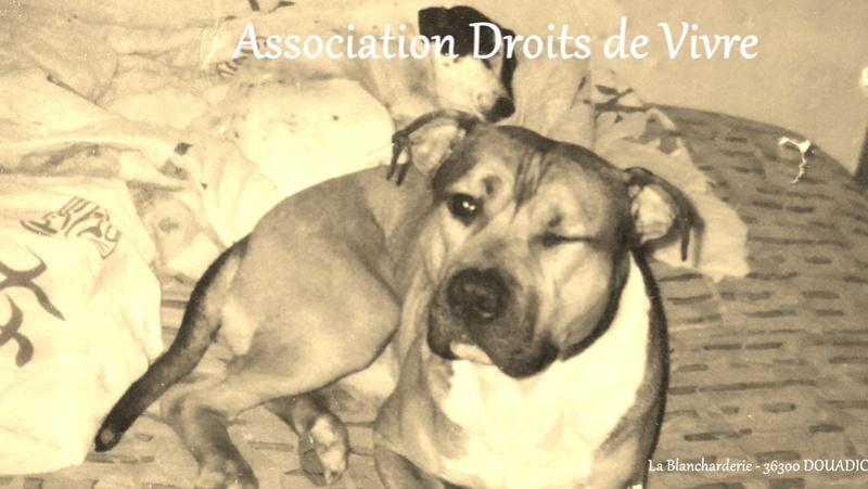 Forum de l'association DROITS DE VIVRE