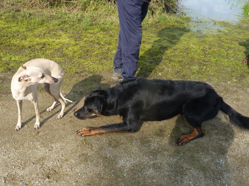 Comportement des chiens entre eux