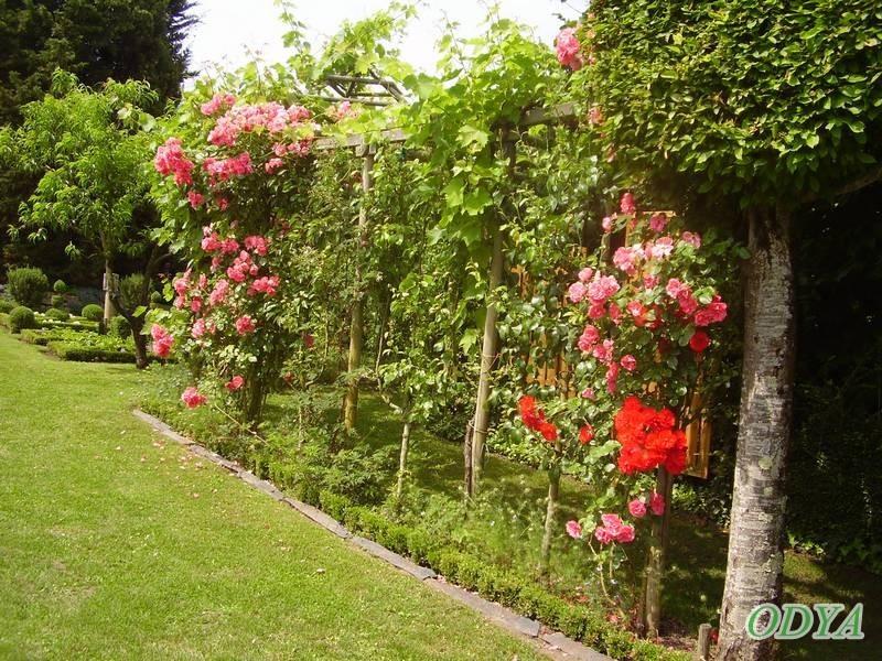 visite de jardins prives chauvigne maine et loire. Black Bedroom Furniture Sets. Home Design Ideas