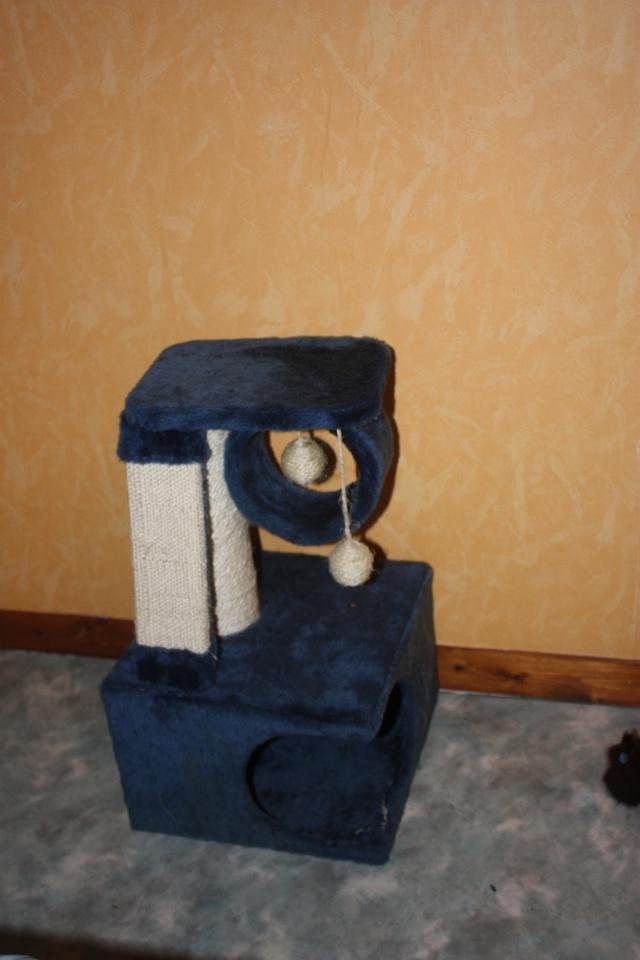 vos arbres chat page 21 chaperlipopette forum. Black Bedroom Furniture Sets. Home Design Ideas