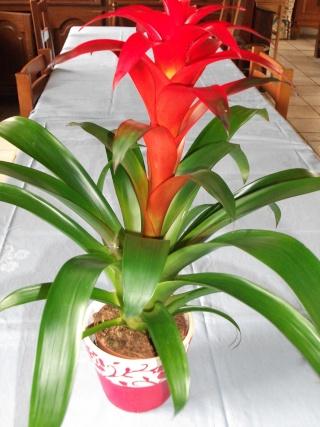S cateur fourchettes brom lia toutes les plantes d 39 int rieur sauf les orchid es - Arrosage orchidee d interieur ...