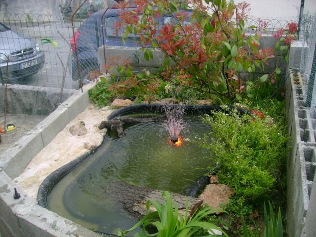 Mon bassin ext rieur pour mes tss page 1 for Materiel pour bassin exterieur