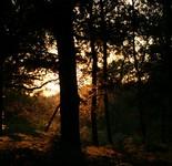 Forêt & Lac