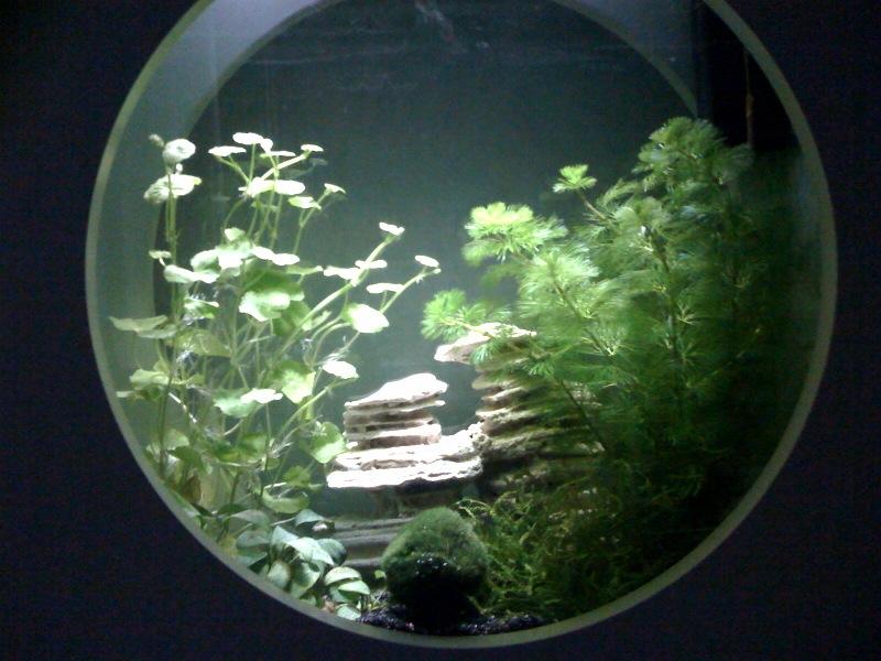Question aquarium carr e plat for Aquarium plat