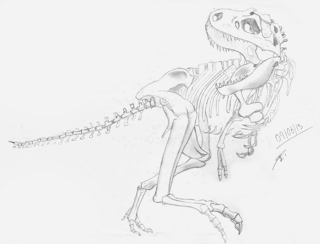 Squelette de tyrannosaure - Dessin de tyrannosaure ...