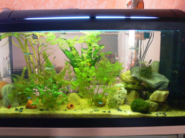 mon aquarium 100 litres et mon 20 litres. Black Bedroom Furniture Sets. Home Design Ideas