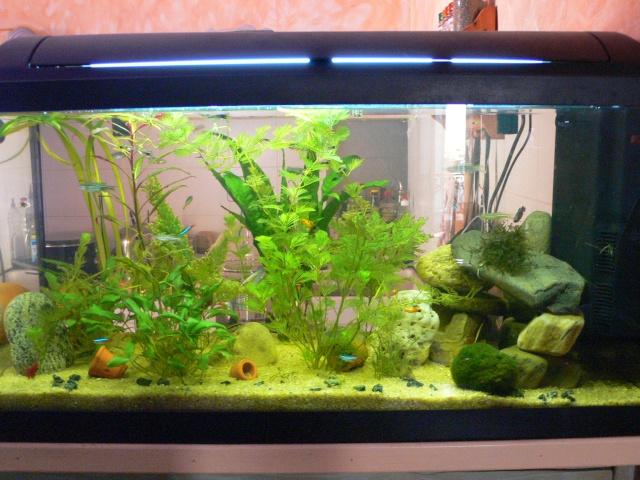 Mon aquarium 100 litres et mon 20 litres for Poisson tropicaux pour aquarium