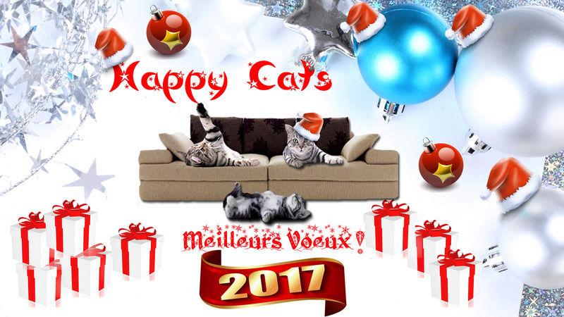 Forum sur les chats, Happy Cats