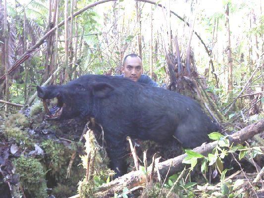 Big Island Island Hawaii Hunting Forum