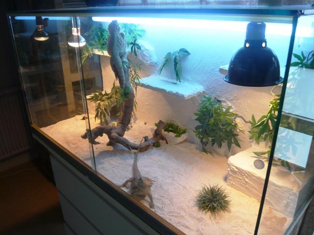 decors terrarium pogona