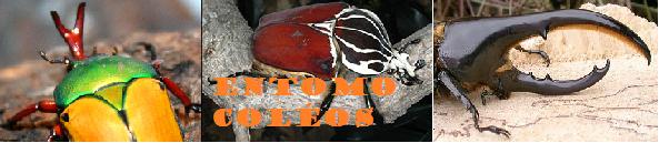 Entomo-coléos