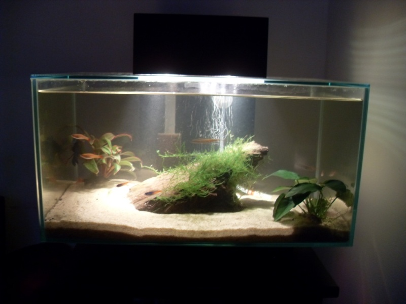 ... I Transferred Some Stock From My Old Tank To This One   I Hadnu0027t Really  Thought Of An Aquascape   I Just Used What I Had Available To Me On The Day!