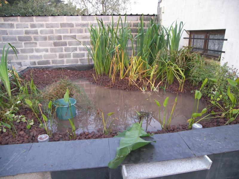 Construction du lagunage page 2 - Plantes pour bassin naturel villeurbanne ...
