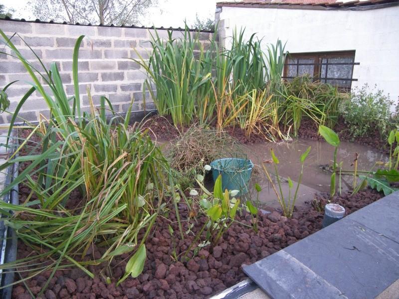 Construction du lagunage page 2 - Plantes oxygenantes pour bassin ...
