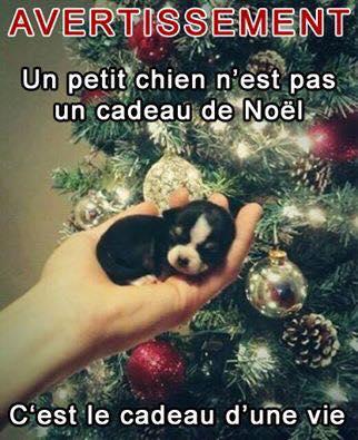 Un petit chien n'est pas un cadeau de Noel