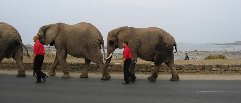 elepha10.jpg
