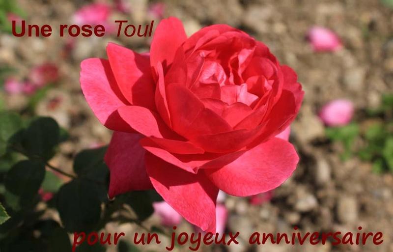 rosera10.jpg