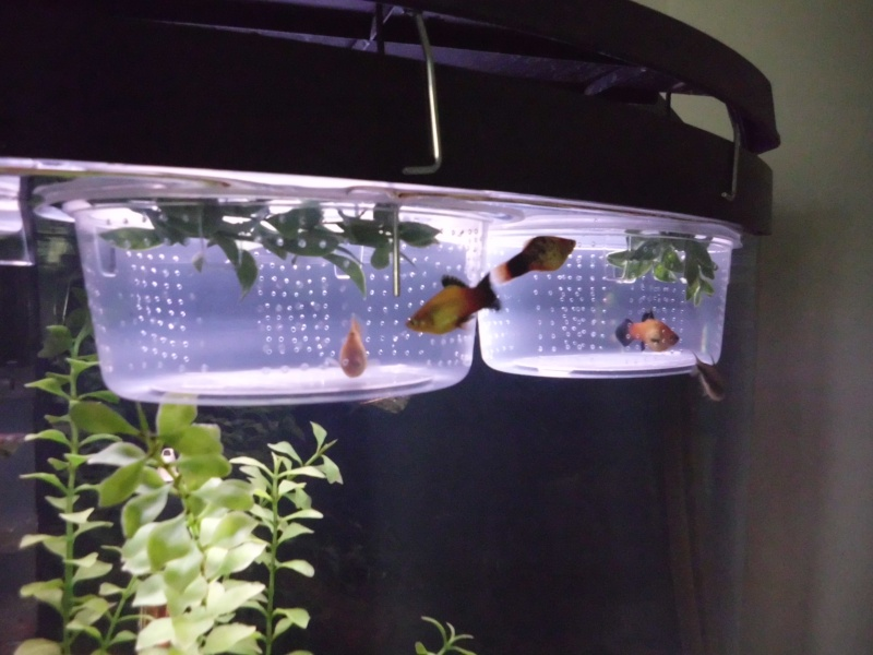how to make your own fish tank cheap for 15
