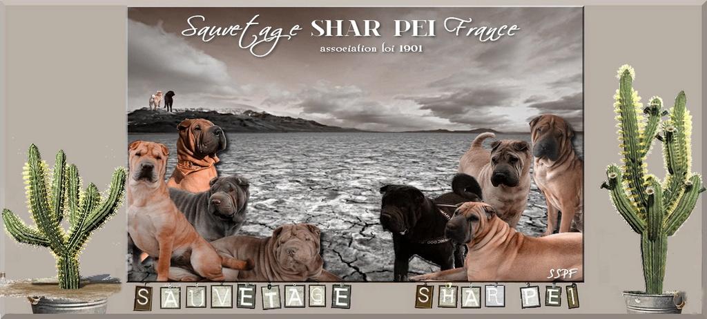 Sauvetage Shar Pei France 11 place Xavier DE MAÎSTRE 14140 LIVAROT