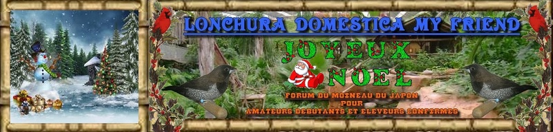 Lonchura Domestica my Friend - Forum