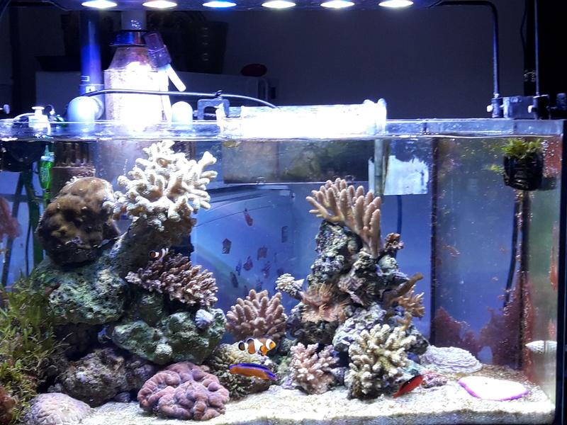 recifal france aquarium 100 litres pour coraux durs. Black Bedroom Furniture Sets. Home Design Ideas