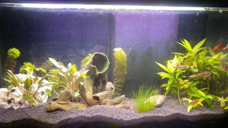 Renouvellement substrat forum aquarium for Substrat pour aquarium