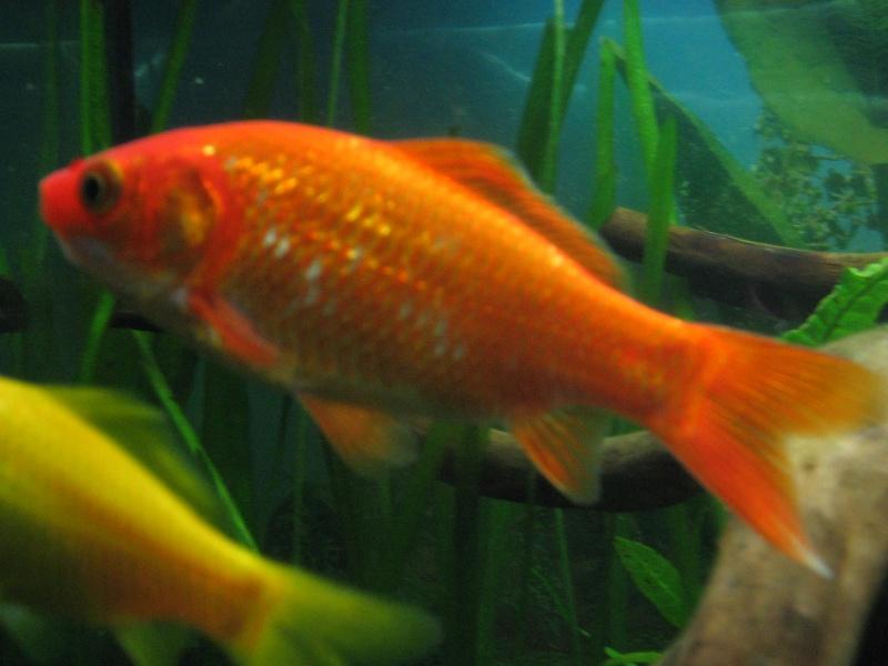 Le 210 litres des poissons rouges nouveau d part page for Prix des poissons rouges