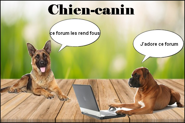 Forum Chien, Chien Canin