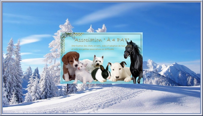 ASSOCIATION 4 PAT