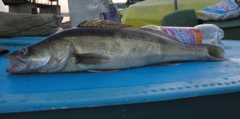 клев рыбы на волге в саратове