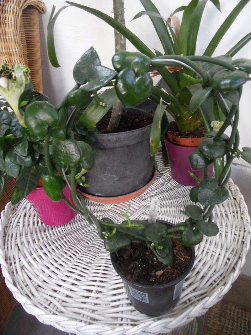 Parachute plant