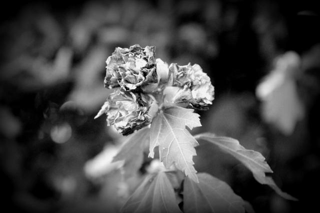 Reflex Click Fleurs Fanees
