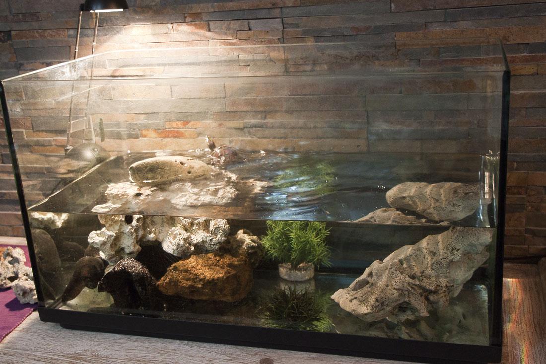 Ma tortue d 39 eau essaye de s 39 vader - Aquarium complet pour tortue d eau ...