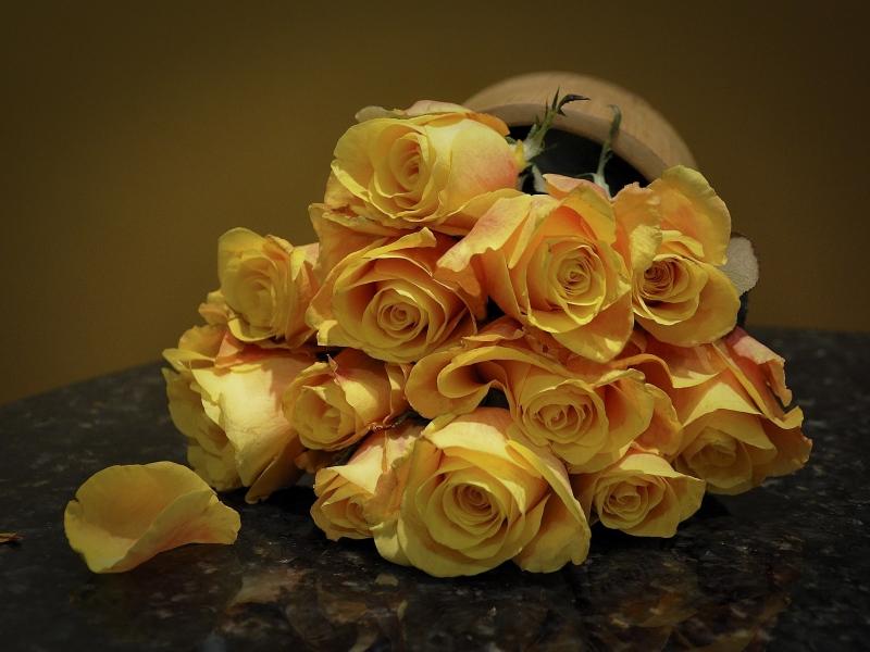 roses_12.jpg