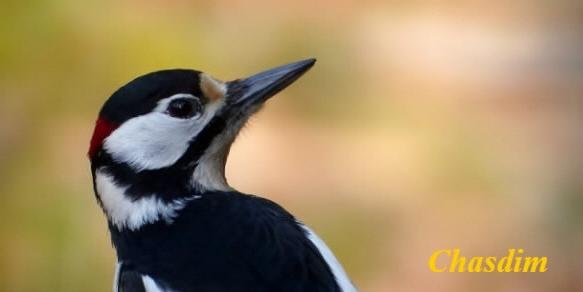 <font color=#DDEB1D>Forum des oiseaux de France et d'Europe</font>