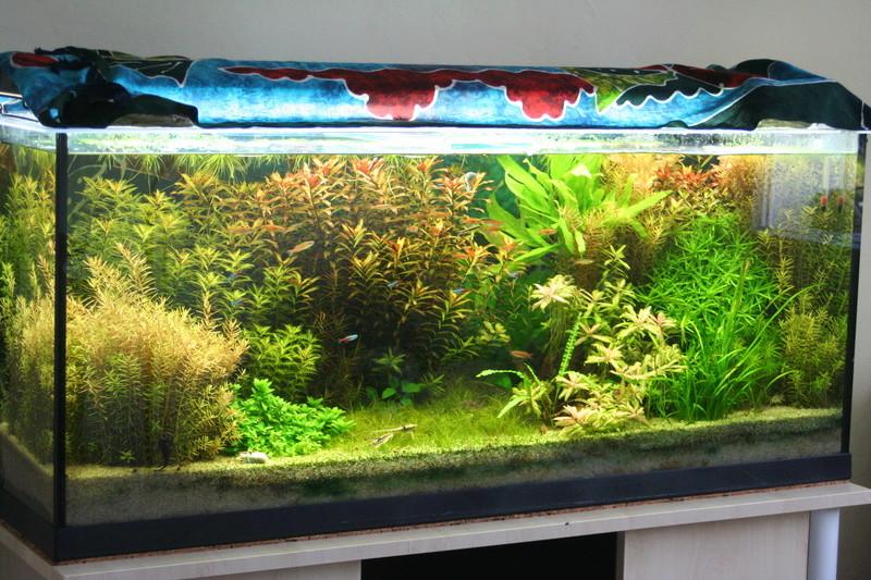 vends plantes d aquarium faciles 73 envois