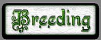 НАШЕ РАЗВЕДЕНИЕ/OUR BREEDING