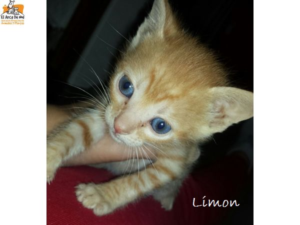 limon10.jpg