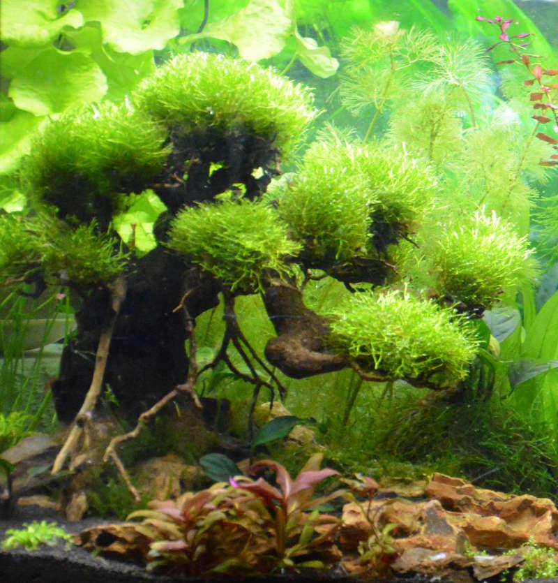 Mousse aquarium boule for Aquarium boule