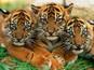 Svet životinja