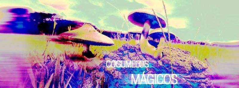 Cogumelos & Enteógenos