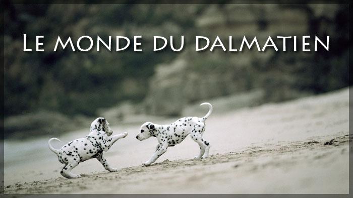 Le monde du dalmatien