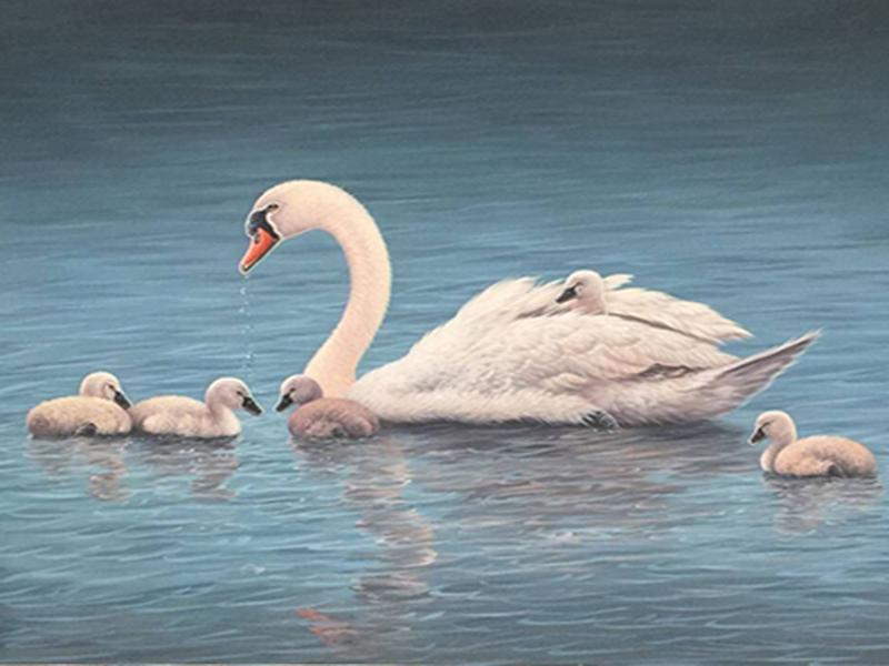 swan0010.jpg